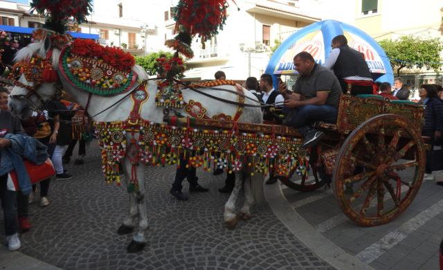 Cavallo Indigeno Siciliano, Den sicilianske hest. Foto: KirstenSoele