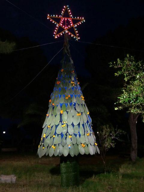 Juletræ af kaktusblade, pyntet med clementiner og med skiftende farver lys. Foto: KirstenSoele
