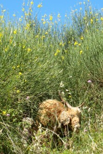 På græs i Parco dei Nebrodi Foto: Kirsten Soele